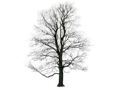 Tree Image Hiver