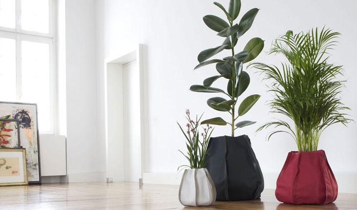 Plant Sac by Patrick Nadeau